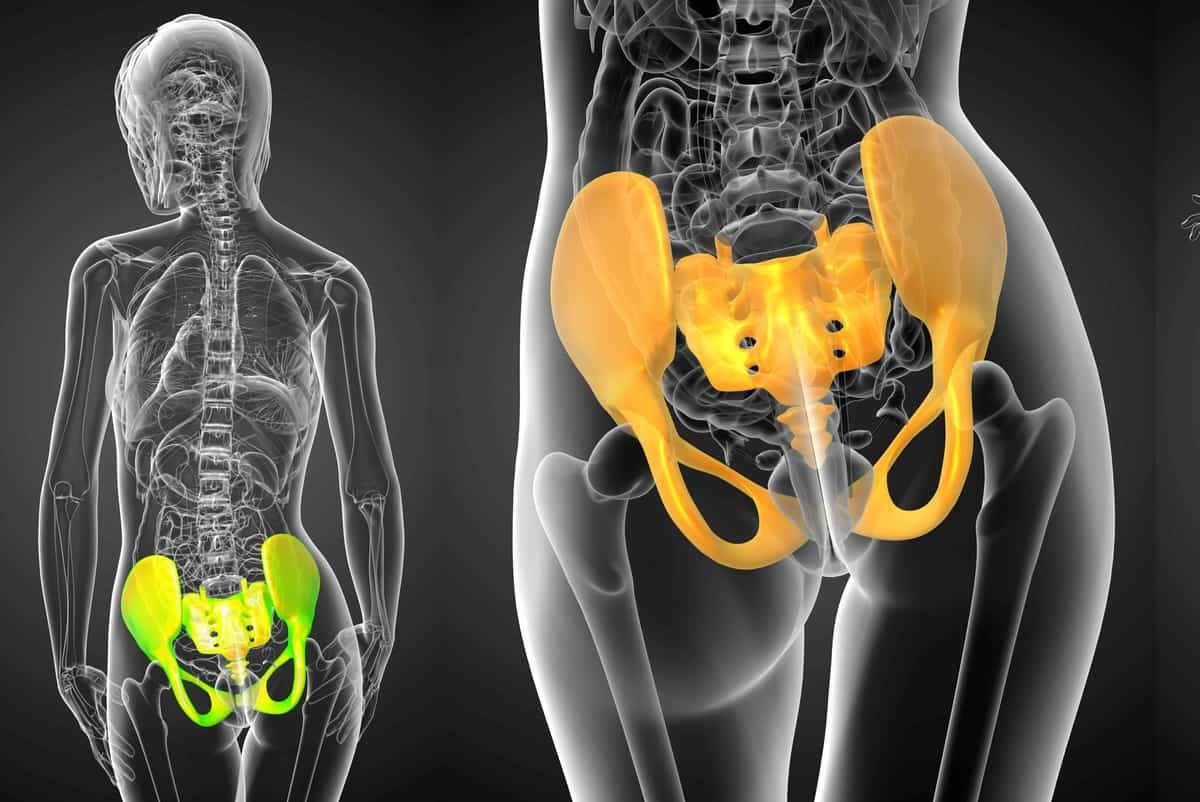 hip pelvis (2)